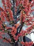 Copac-orhidee-P2