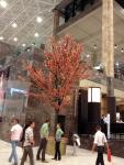 Copac-orhidee-P3
