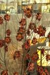 Copac Trei P1