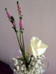 Flori noiembrie 022