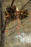 Palas-copac-protea-leucandendron-003