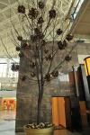 Palas-copac-protea-leucandendron-004