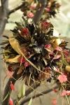 Palas-copac-protea-leucandendron-009