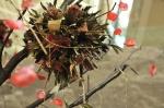 Palas-copac-protea-leucandendron-013