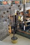 Palas-copac-protea-leucandendron-029