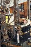 Palas-copac-protea-leucandendron-030