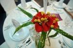 Targ nunti 2013 Iasi 124
