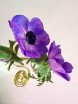 Flori noiembrie 029