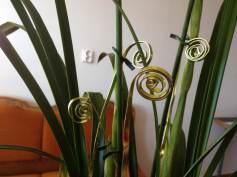 Flori noiembrie 035